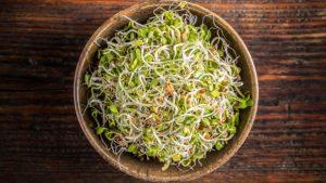 Les graines : alliées de votre santé